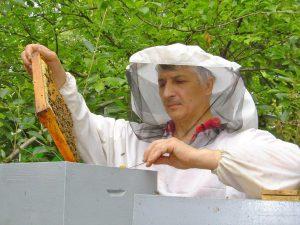 Поведение опытного пчеловода
