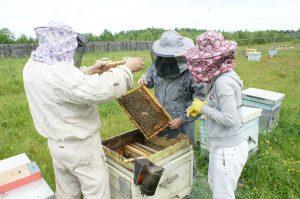 Секреты прибыльного пчеловодства