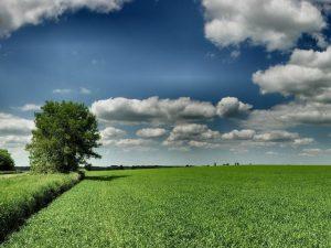 Как оформить в собственность арендованный участок земли