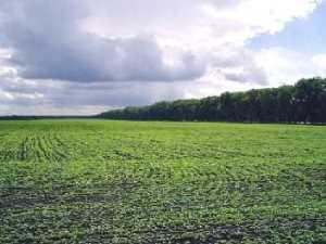 Земли поселений - виды разрешенного использования