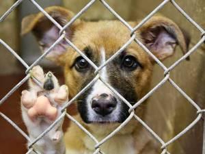 Закон о защите животных от жестокого обращения в России